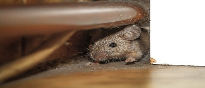 Mice hole blocking service available