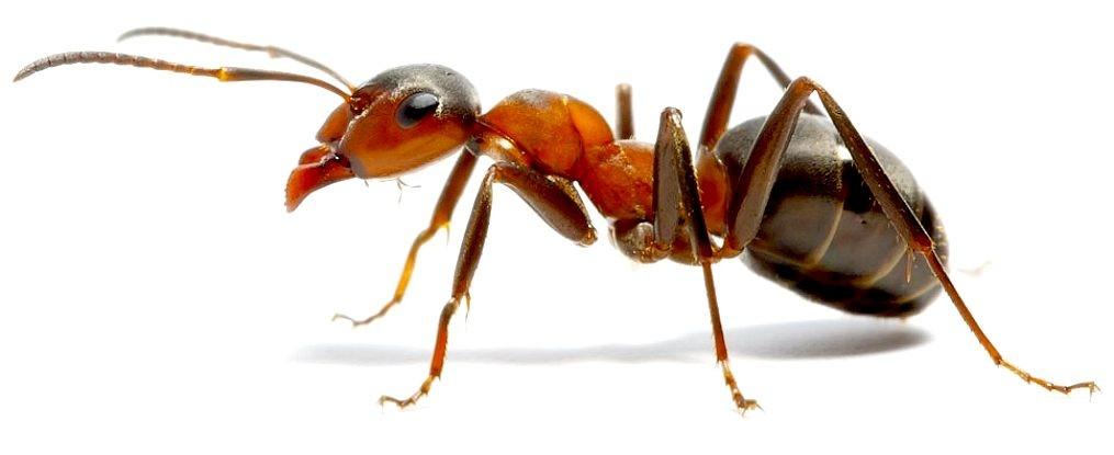 Pest control near me ants
