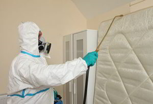 ABOUT PEST KILLER'S UK PEST CONTROL LONDON